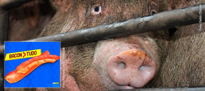 Subway se desculpa após publicar imagem polêmica no auge da comoção pelos porcos