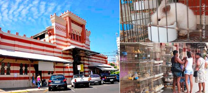 Comerciante do Mercado de Campinas é proibido de vender galinhas, coelhos e outros animais
